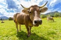 Przez zakaz handlu w niedzielę rolnicy nie mogą sprzedawać plonów!